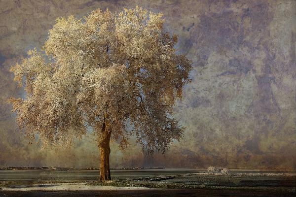 L'arbre l'hiver - Laurence Bernamont