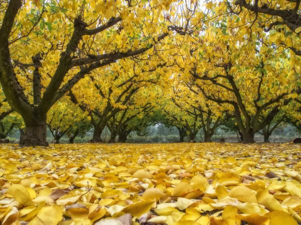 Autumn - Gerard Viguier