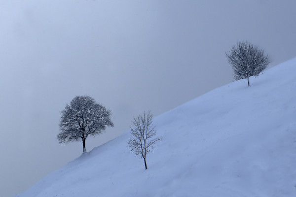 Trois arbres dans la neige - Christian Machet